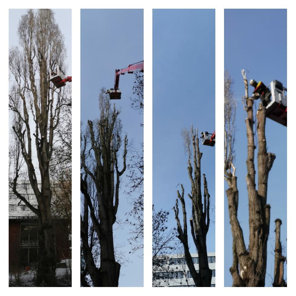 Baumpflege mit Hubarbeitsbühne